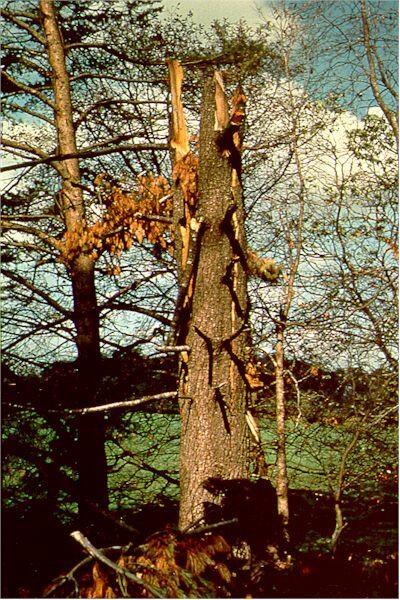 Eine Freude für jeden Urmenschen: Ein brennender Baum